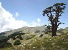 Seminario al Parco del Pollino sulla conservazione della biodiversità vegetale domestica
